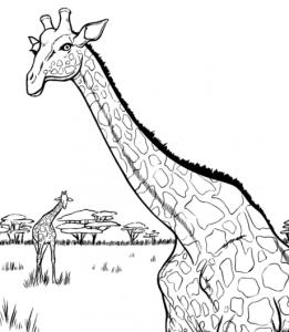 ζωγραφιές με ζώα - καμηλοπάρδαλη