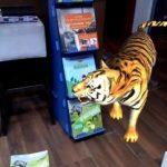 Διαδραστικό Βιβλίο Οι βασιλιάδες της ζούγκλας