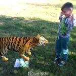Εκπαιδευτικό διαδραστικό βιβλίο άγρια ζώα