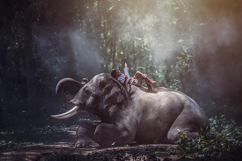 """Γνώρισε """"τα ζώα που ζωντανεύουν"""" και αφέσου στο ταξίδι"""